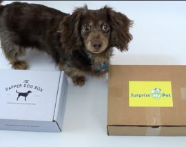 Paws up for packaging & shipping supplies by MRBOXonline